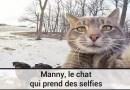 Manny, le chat qui prend des selfies
