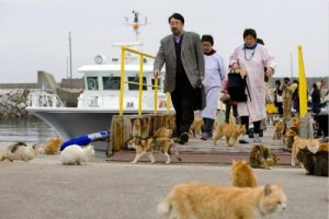 Aoshima ile aux chats japon chat marrant rigolo insolite drôle chaton fun infirmière