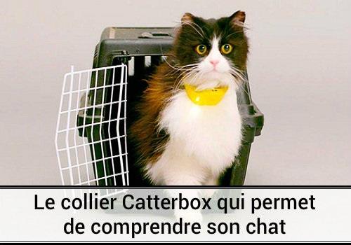 Collier catterbox chat parole parler chat dr le chat - Chaton marrant ...