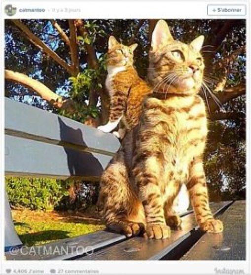 Didga et Boomer the Skimboarding CAT le chat qui fait du skimboard chat drôle chat marrant chat rigolo chaton chat léopard chat leopard chat bengal prix chat du bengal prix chaton bengal chat du bingal