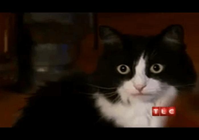 boule-de-poil-chat-boule-de-poil-boule-poil-chat-image-chaton-mignon-chat-marrant