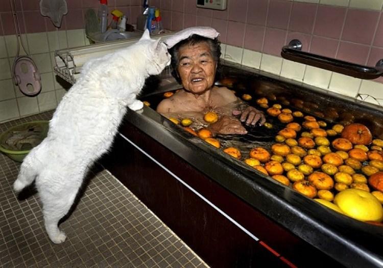 des hommes et des chatons photo chat image chat photo chat mignon photos de chatons image chat images marrantes photo comique photos insolites