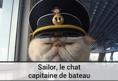Sailor, le chat capitaine de bateau