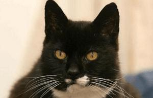 Vieux noir chatte tubes
