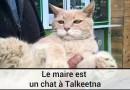 Le maire est un chat à Talkeetna
