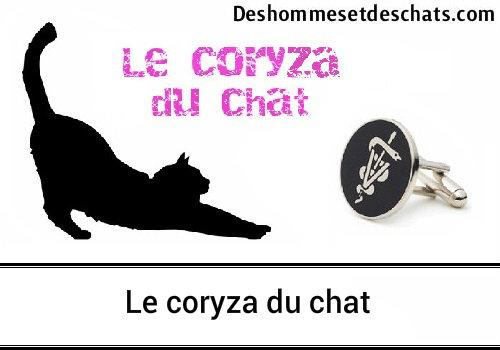 Le coryza du chat : Tout ce que vous devez savoir