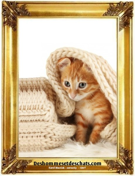chat trop mignon humour images photos amusantes photos chatons photos de chatons photo animaux image chat image mignonne petit chat mignon image chaton chat photo chat marrant