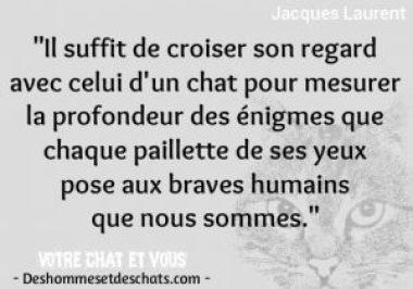 12 10 Citations Et Proverbes Sur Les Chats Des Hommes Et