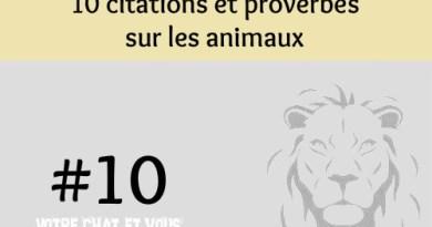 #10 – 10 citations et proverbes sur les animaux