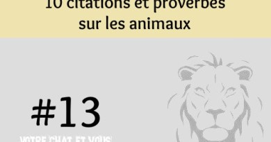 #13 – 10 citations et proverbes sur les animaux