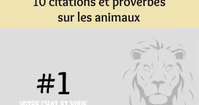 #1 – 10 proverbes et citations sur les animaux