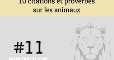 #11 – 10 citations et proverbes sur les animaux