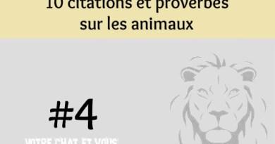 #4 – 10 citations et proverbes sur les animaux