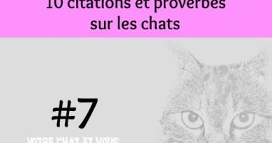 #7 – 10 citations et proverbes sur les chats