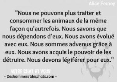16 10 Citations Et Proverbes Sur Les Animaux Des Hommes