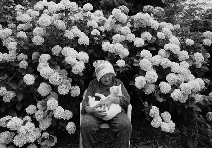 image mignonne image chaton chatons mignons chat photo gratuit images de chatons chat image chat photo chat image photo chat drole foto de chat des hommes et des chatons image noir et blanc photo noir et blanc photographie noir et blanc photo noir blanc image en noir et blanc portrait noir et blanc photo chat
