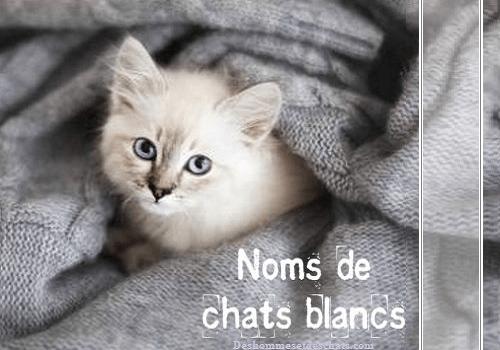 Liste des noms de chats blancs | Des hommes et des chats