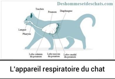 Le système respiratoire du chat