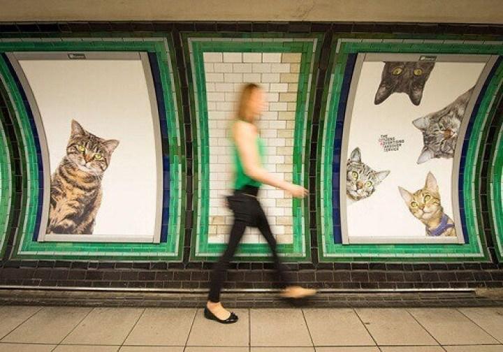 animal-chat-photo-de-chat-drole-image-mignonne-chat-chaton-image-de-chaton-mignon-image-de-chaton-trop-mignon-foto-de-chat-rigolo-chats-images-image-chat-drole