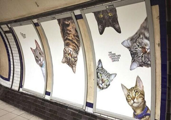 des-hommes-et-des-chatons-image-de-chton-image-de-chat-chts-images-photo-de-chat-drole-images-chatons-image-de-petit-chaton-chaton-photo-image-drole-chat