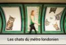 Les chats du métro londonien