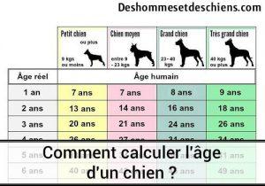 calculer-l-age-dun-chien-tableau-ages-des-chiens-age-de-chien-en-humain-calcul-age-chien-l-age-des-chiens-correspondance-age-chien-tableau-des-ages-chien-comment-savoir-l-age-d-un-chien