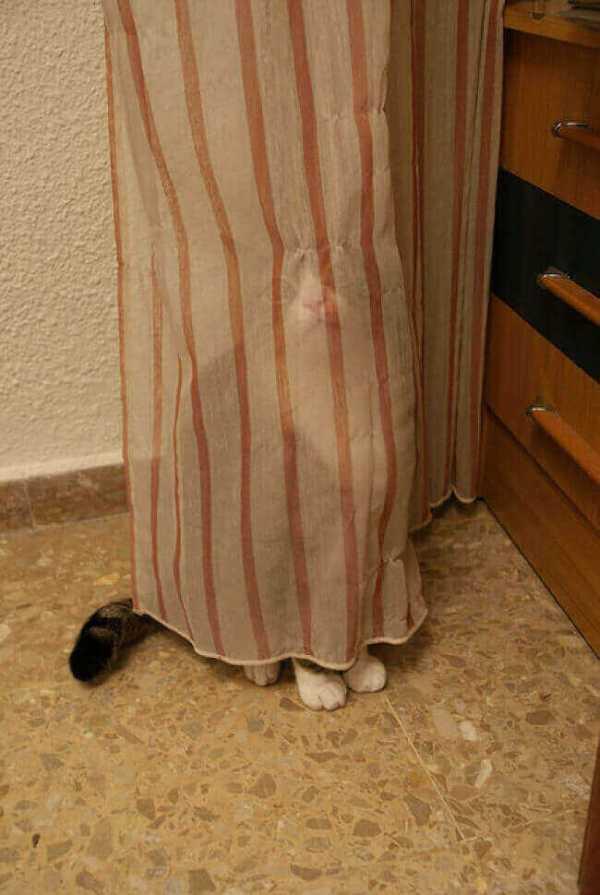 chatons-rigolos-les-animaux-rigolos-photo-rigolote-de-chat-chats-rigolos-marrant-petit-chat-rigolo-photo-chat-drole-chats-marrants-photos-les-chats-marrants-chaton-marrant