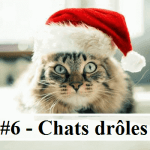 #6 – 10 photos de chats drôles