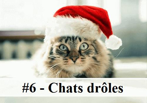 #6 - 10 photos de chats drôles | Des hommes et des chats