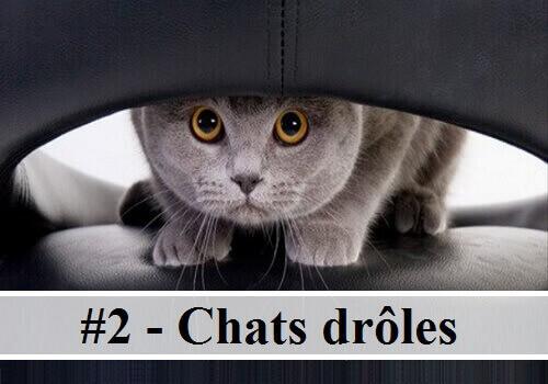 #2 - 10 photos de chats drôles | Des hommes et des chats