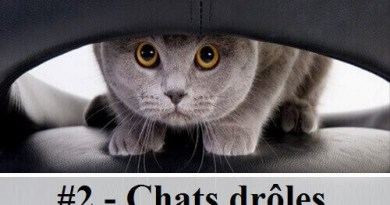 1 10 photos de chats de richard saunders des hommes - Dessin de chat rigolo ...