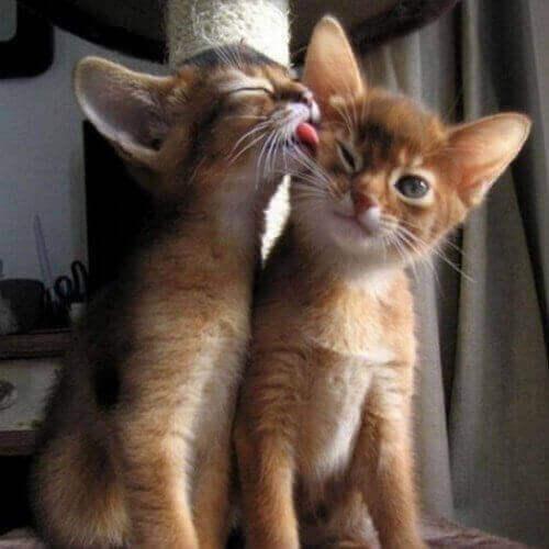 Photo chat mignon photo d animaux image chaton mignon photos de chatons mignons image drole chat - Photo chat mignon ...