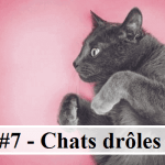 #7 – 10 photos de chats drôles