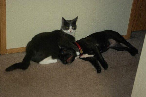 photo-chat-rigolo-photo-de-chaton-image-de-chat-rigolo-chat-comique-photo-animaux-photos-de-chats-rigolos-photo-de-chat-images-chatons-image-de-chat-photo-de-chat-mignon