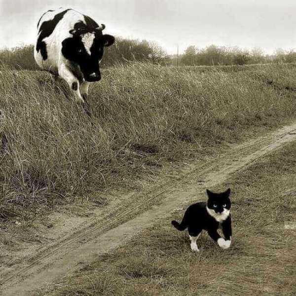 5 10 photos de chats dr les des hommes et des chats - Photo de chaton rigolo ...
