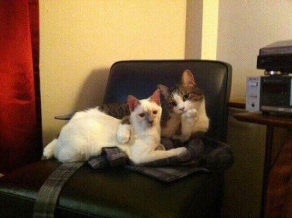photo-de-chat-mignon-chat-drole-photo-animaux-photo-de-chaton-photo-mignonne-image-chaton-chat-rigolo-foto-de-chat-photo-de-chatons-petit-chat-mignon-chats-droles