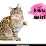 Le Bobtail américain
