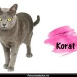 Le Korat