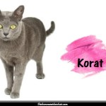 Le Korat