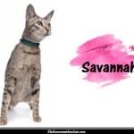 Le Savannah