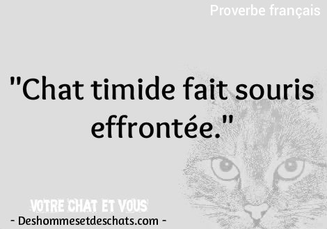 Animaux Drole Chat Image Chaton Dicton Citations Animaux