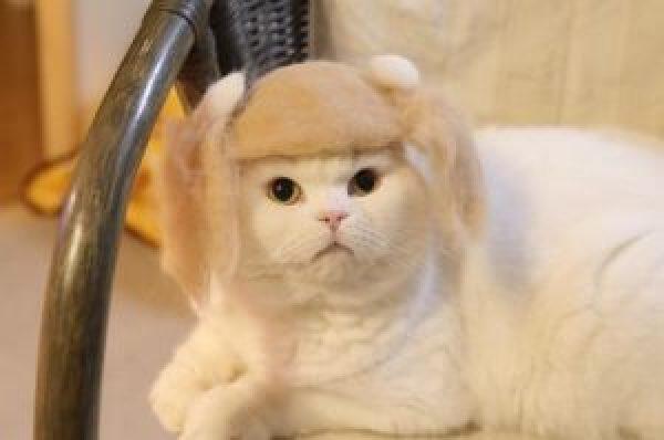 4 fabrication de chapeaux en poils de chat des hommes - Photo de chaton rigolo ...