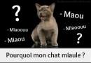 Le miaulement du chat : Pourquoi mon chat miaule ?