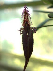 威張ってる?植物の写真