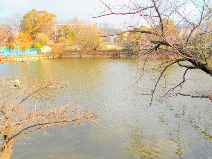 小路明和公園 ため池