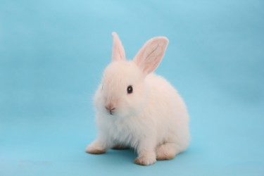 うさぎの種類で飼いやすいのは?ウサギを選ぶポイント