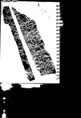 Alligator2_BWmed_wholepageblackmosque