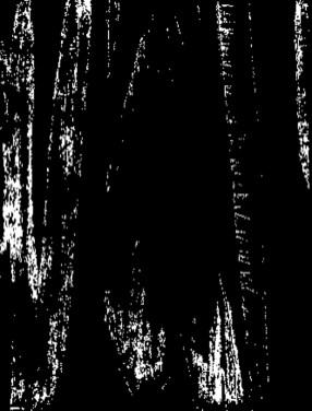 Woodcut Black and White very dark scan