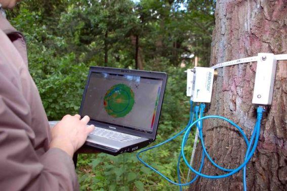 обследование_деревьев_5