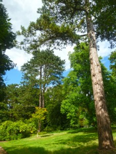 waddesdon-manor-garden6